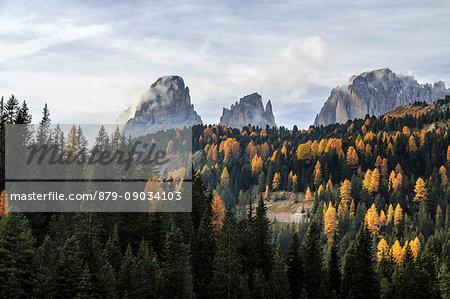 Colorful woods in autumn around Sassopiatto and Sassolungo. Dolomites Trentino Alto Adige Italy Europe