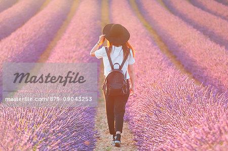 Europe, France,Provence Alpes Cote d'Azur,Plateau de Valensole. Girl in lavender field.