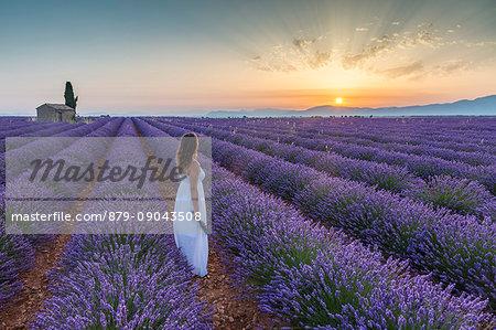 Woman at dawn in a lavender field. Plateau de Valensole, Alpes-de-Haute-Provence, Provence-Alpes-Cote d'Azur, France.