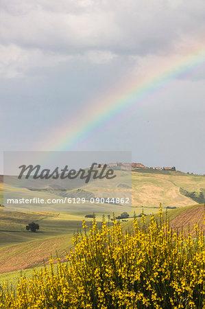 Yellow flowers and rainbow frame the green hills of Crete Senesi (Senese Clays) province of Siena Tuscany Italy Europe