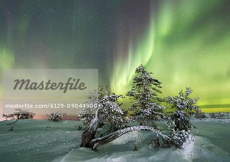 Northern lights and starry sky on the snowy landscape and the frozen trees Levi Sirkka Kittilä Lapland region Finland Europe