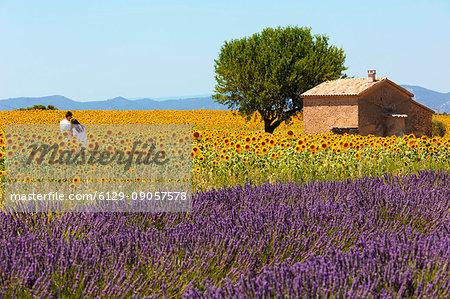 Europe, France,Provence Alpes Cote d'Azur,Plateau de Valensole.Couple among flowers