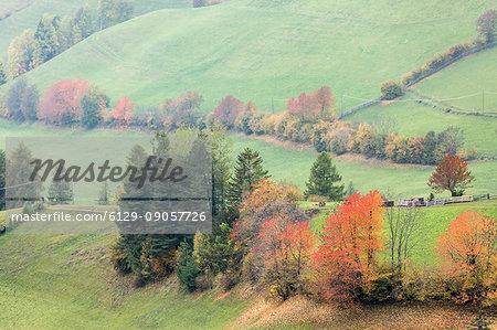 Row of coloured autumnal trees. Santa Maddalena, Funes, Bolzano, Trentino Alto Adige - Sudtirol, Italy, Europe.