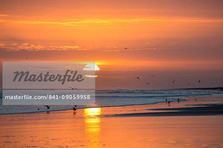 Sunrise from Bamburgh Beach with seagulls in silhouette and sun's orange orb, Bamburgh, Northumberland, England, United Kingdom, Europe