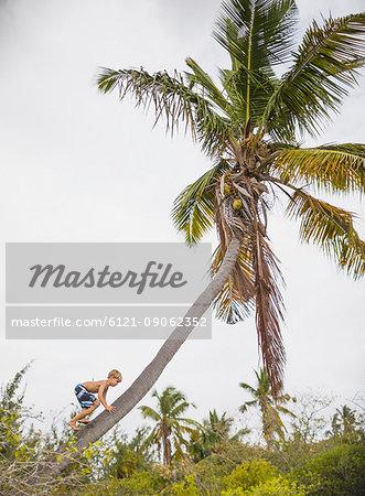 Boy climbing up a coconut tree