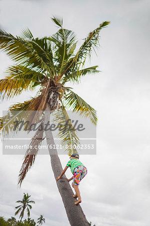 Girl climbing up a coconut tree