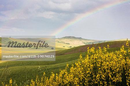 Yellow flowers and rainbow frame the green hills of Crete Senesi (Senese Clays), Province of Siena, Tuscany, Italy, Europe