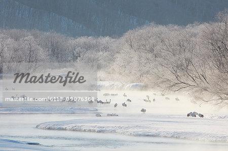 Flock of birds in woodland in winter.