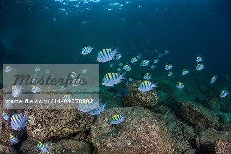Fish in ocean, Isla Espiritu Santo, La Paz, Baja California Sur, Mexico