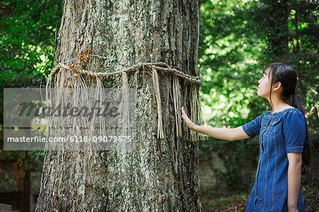 Young woman wearing blue dress touching shimenawa ropes on tree at Shinto Sakurai Shrine, Fukuoka, Japan.