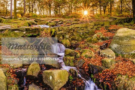 Burbage Brook, autumn sunrise, golden leaves and waterfall, Padley Gorge, Peak District National Park, Derbyshire, England, United Kingdom, Europe