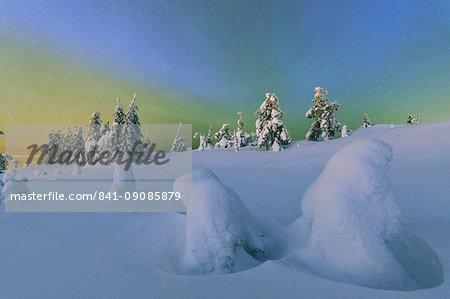 Colorful Northern Lights of the Aurora Borealis and starry sky on the snowy woods, Ruka, Kuusamo, Ostrobothnia region, Lapland, Finland, Europe