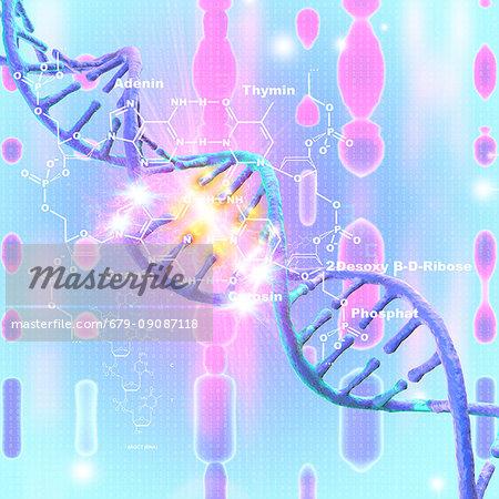 DNA (Deoxyribonucleic acid) damage, illustration.