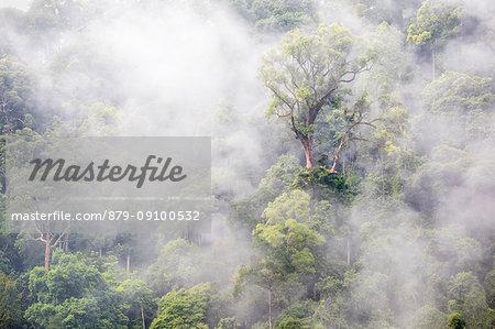 Gunung Leuser National Park, Northern Sumatra, Indonesia, Asia