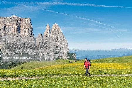 Alpe di Siusi/Seiser Alm, Dolomites, South Tyrol, Italy. Hiker on the Alpe di Siusi