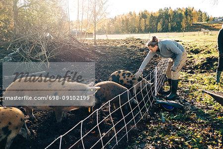 Full length of farmer petting pig in animal pen at organic farm