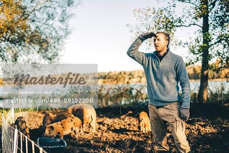 Mid adult male farmer shielding eyes in pigpen at organic farm
