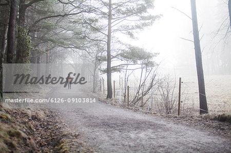 A dirt road in Sweden