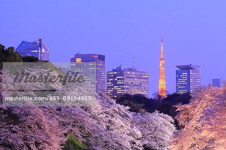Cherry blossoms at Chidorigafuchi moat, Tokyo, Japan