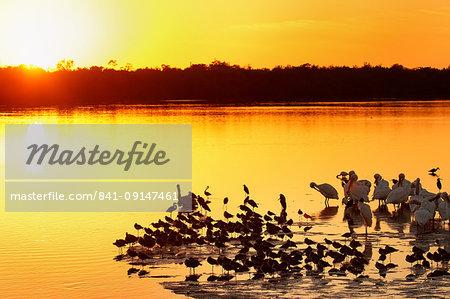 Sunset at Ding Darling Wildlife Refuge on Sanibel island, Florida, United States of America, North America