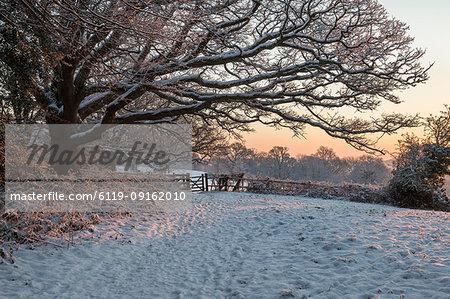 Snow covered High Weald landscape at sunrise, Burwash, East Sussex, England, United Kingdom, Europe