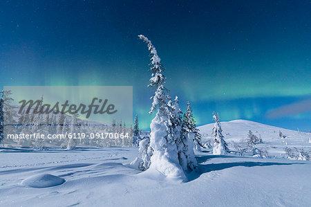 Northern Lights (Aurora Borealis) above the snowy woods, Pallas-Yllastunturi National Park, Muonio, Lapland, Finland, Europe