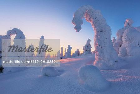 Sunburst on frozen trees at dawn, Riisitunturi National Park, Posio, Lapland, Finland, Europe