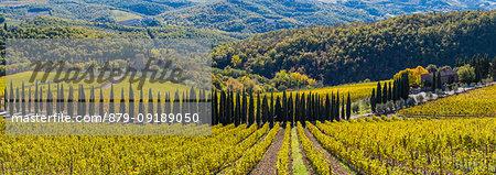 Albola castle's vineyards, Radda in Chianti, Siena, Tuscany, Italy.