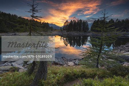 Two larches admire sunset on Lago Azzurro, Spluga valley, Sondrio province, Lombardy, Italy, Europe