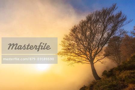 The sun illuminates a tree hidden by fog. Bocchetta di Prada, Grigna Settentrionale(Grignone), Northern Grigna Regional Park, Lombardy, Italy, Europe.