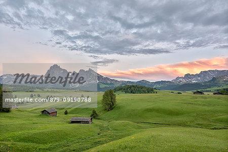 Alpe di Siusi/Seiser Alm, Dolomites, South Tyrol, Italy. Dusk on the Alpe di Siusi/Seiser Alm with the peaks of Sassolungo and Sassopiatto