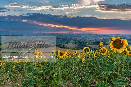 Monterubbiano, province of Fermo, Marche, Italy, Europe. Sunset in the hills around the village of Petritoli
