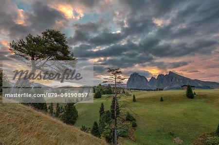 Alpe di Siusi/Seiser Alm, Dolomites, South Tyrol, Italy. Sunrise on the Alpe di Siusi with Sassolungo and Sassopiatto in the background