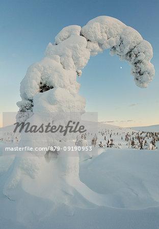 Frozen trees of Riisitunturi hill, Riisitunturi national park, posio, lapland, finland, europe.