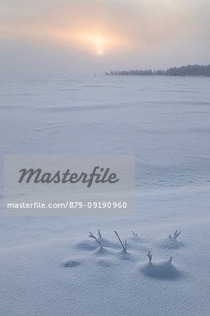 Twilight and mist on the snowy landscape, Muonio, Lapland, Finland, Europe.
