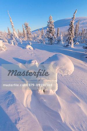 Sun on frozen trees, Pallas-Yllastunturi National Park, Muonio, Lapland, Finland