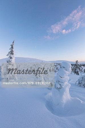 Frozen dwarf shrub and trees, Pallas-Yllastunturi National Park, Muonio, Lapland, Finland