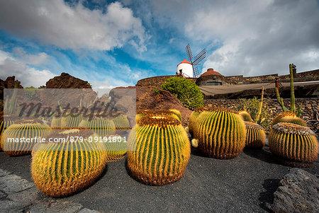 Jardín de Cactus, designed by Cesar Manrique, Lanzarote, Canary island, Spain, Europe