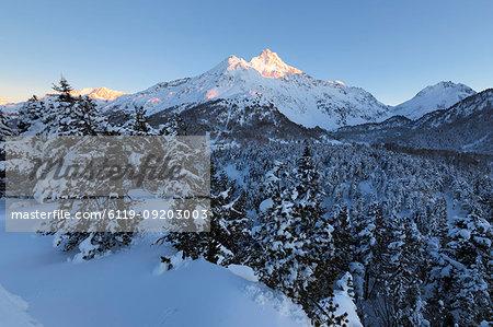 Snow covered trees, Maloja Pass, Bregaglia Valley, Engadine, Canton of Graubunden, Switzerland, Europe