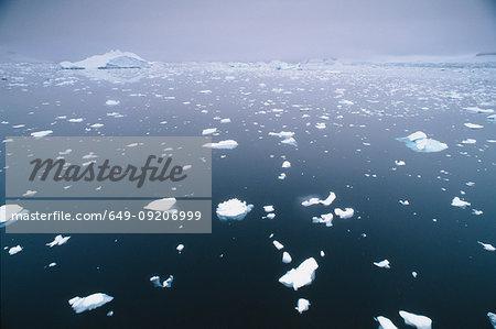 Broken ice floating in water, Antarctic Peninsula, Antarctica
