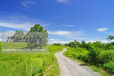 Road of Field