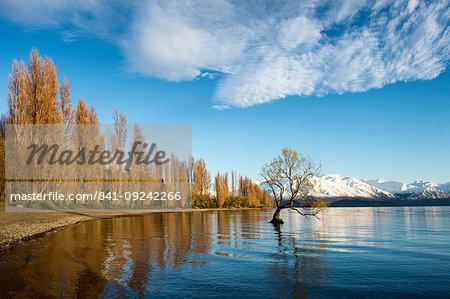 The Wanaka Tree at sunrise, Otago, South Island, New Zealand, Pacific