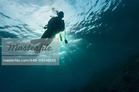Female scuba diver descending into the ocean against the sun, Komodo Island, Nusa Tenggara Timur, Indonesia