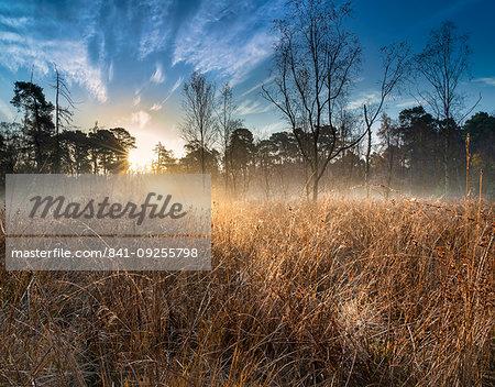 Dawn light over Strensall Common Lowland Heath, Nature Reserve, near York, North Yorkshire, England, United Kingdom, Europe