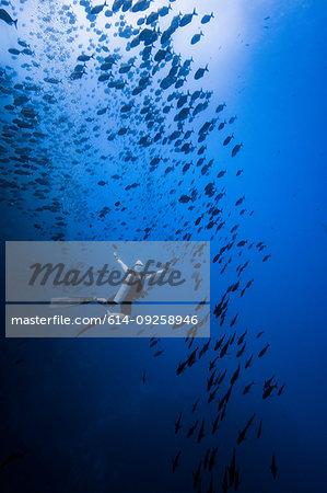 Diver swimming with school of fish, Revillagigedo Islands, Socorro, Baja California, Mexico