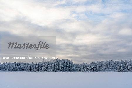 Snow and forest under overcast sky in Kilsbergen, Sweden
