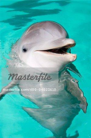 bottlenose dolphin smiling at camera