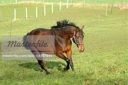 Horse is running on green grass.