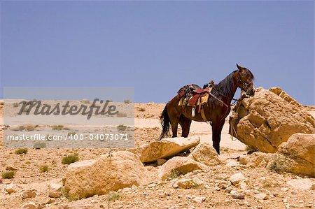 Horse in the desert near Petra, Jordan.