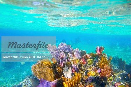 Mayan Riviera reef snorkel underwater coral colorful paradise